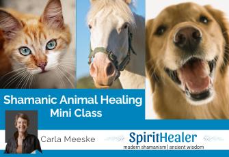 Mini Animal Class 2-29-2021